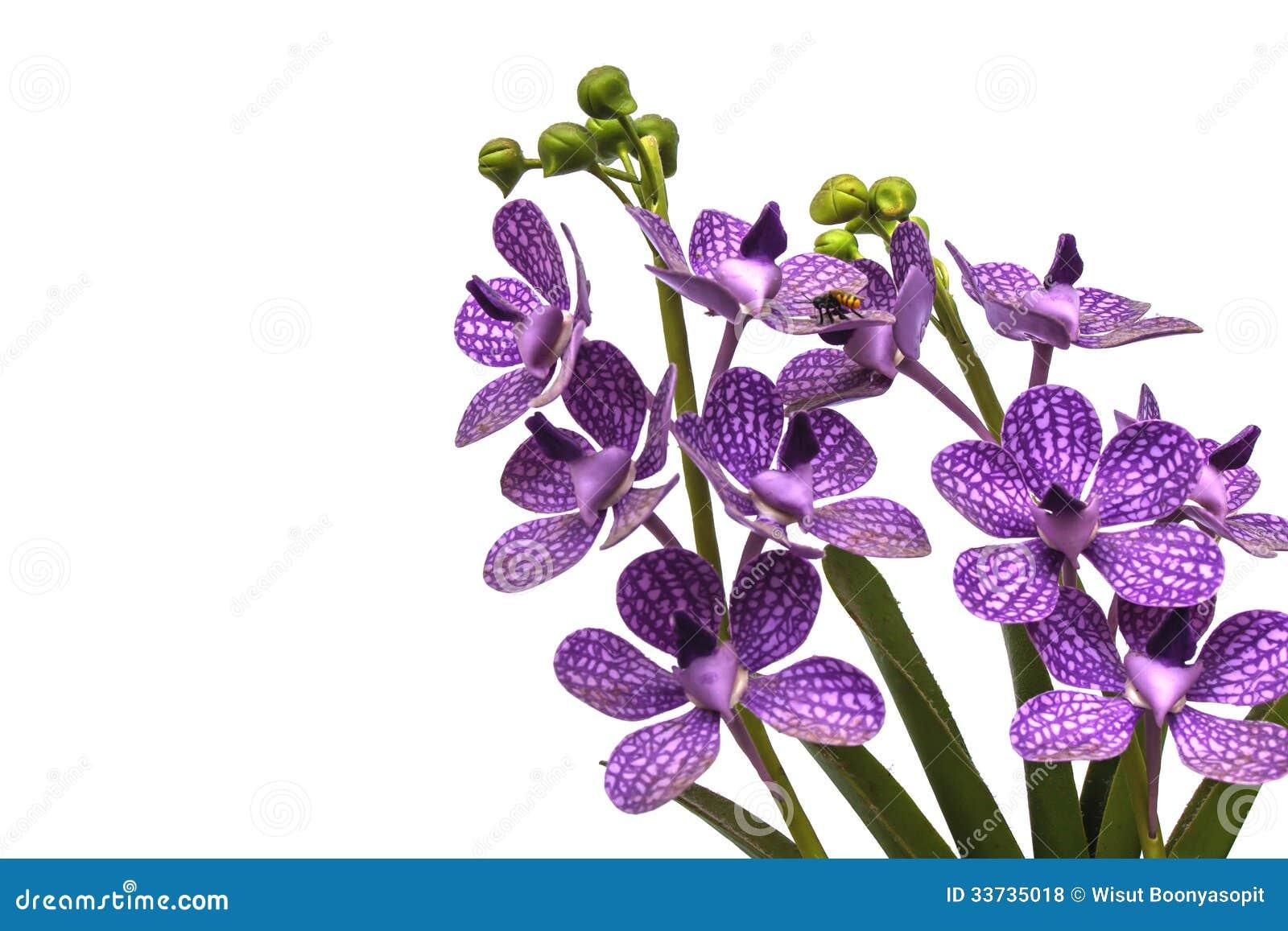 Пластичная орхидея