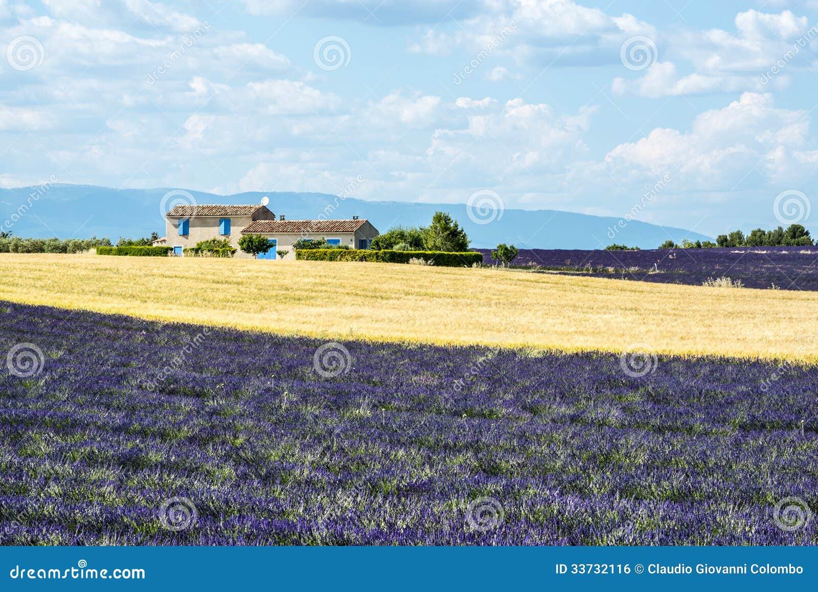 Плато de Valensole (Провансаль), дом и поля лаванды