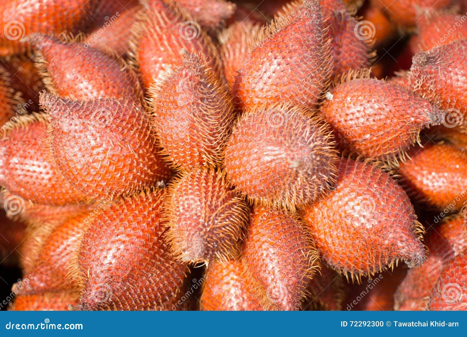 Download Плодоовощ Zalacca Salacca, сладостных и красных кислый тропический в плодоовощ Stal Стоковое Фото - изображение насчитывающей органическо, backhoe: 72292300