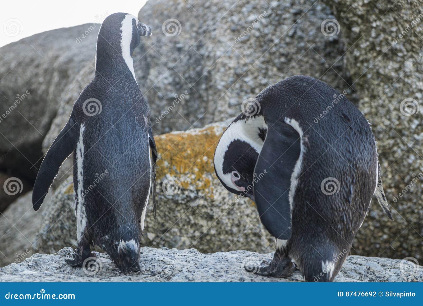 Пляж пингвинов в Кейптауне