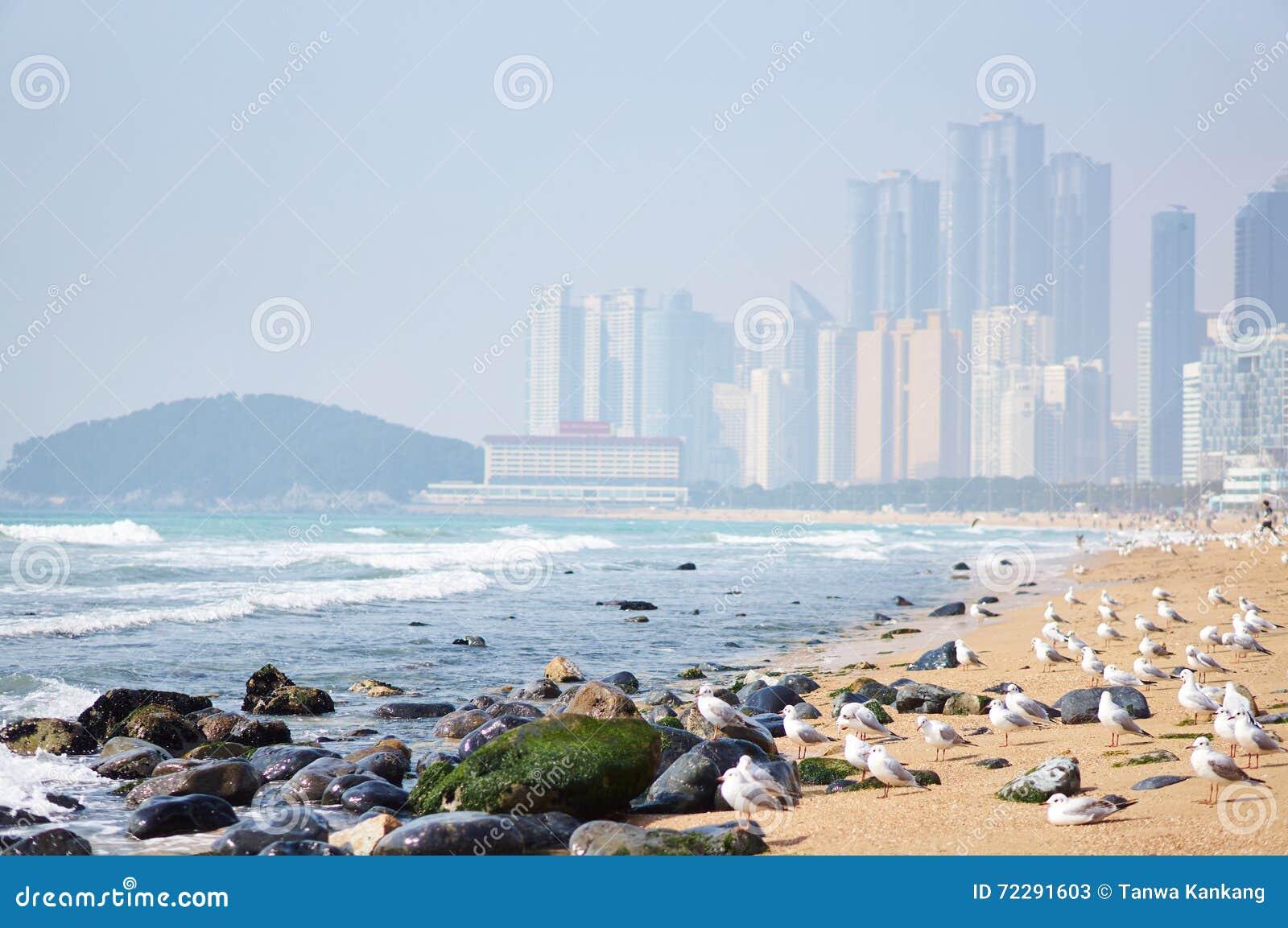 Download Пляж Haeundae стоковое изображение. изображение насчитывающей песок - 72291603