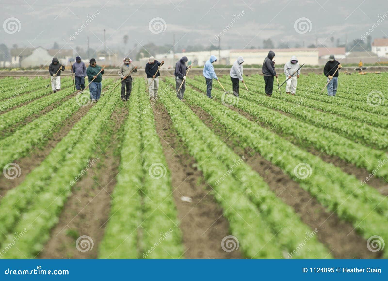 работники работы фермы