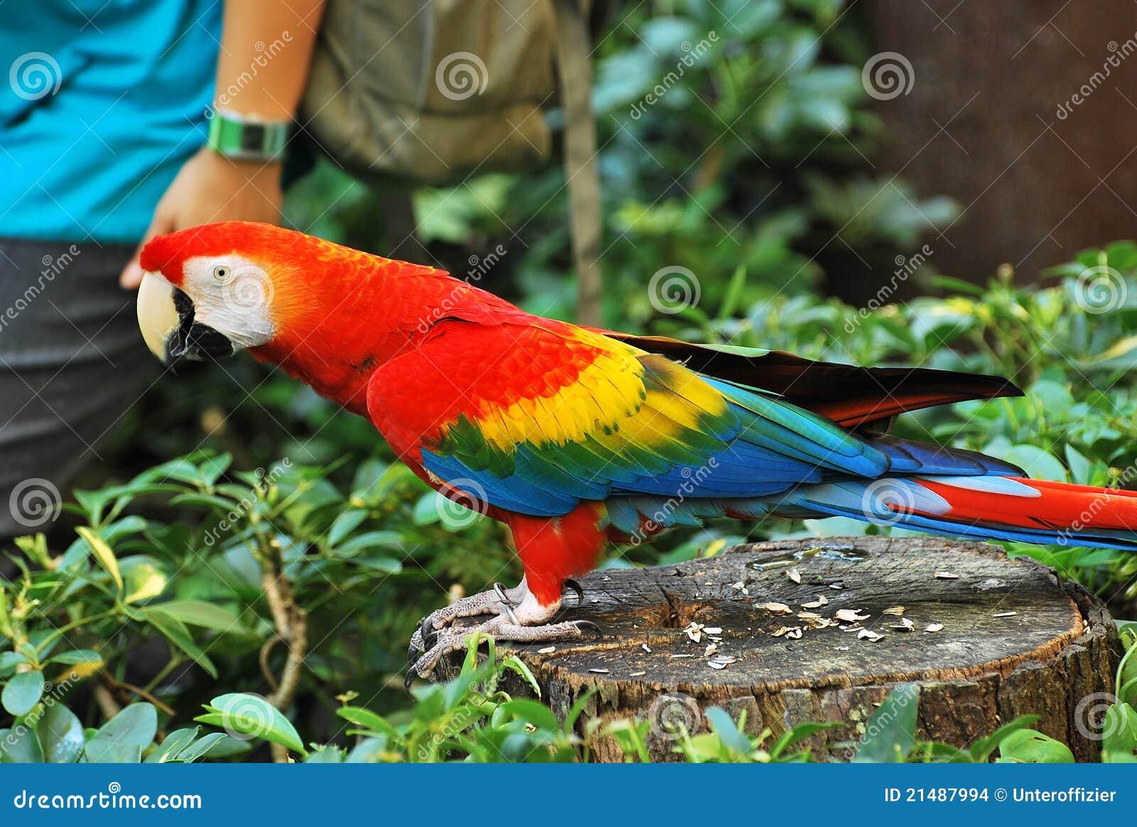 радуга macaw