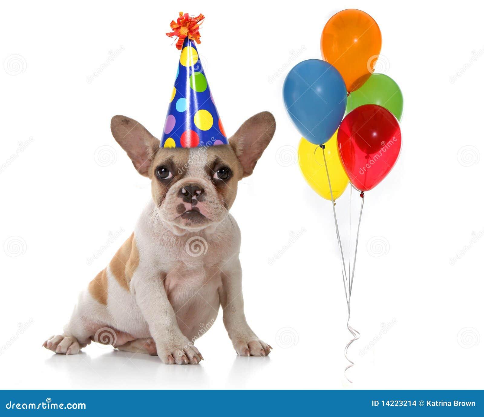 Открытка с днём рождения ветеринару