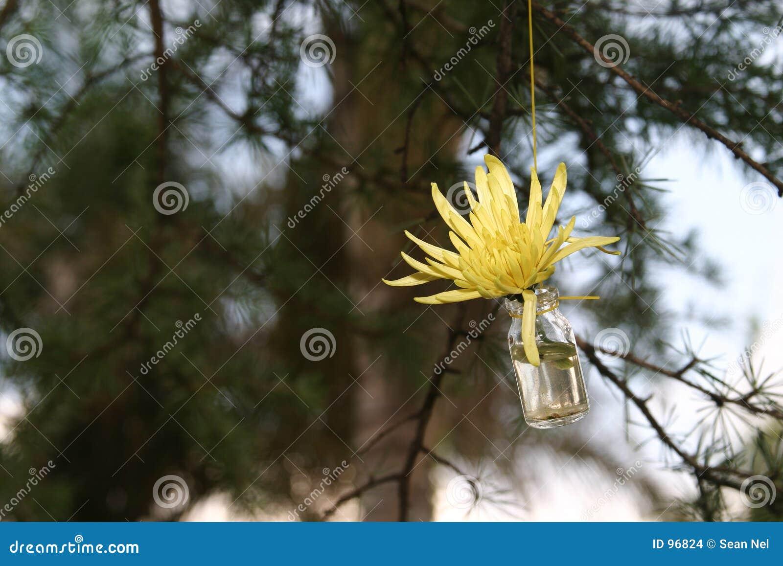 разлейте цветок по бутылкам