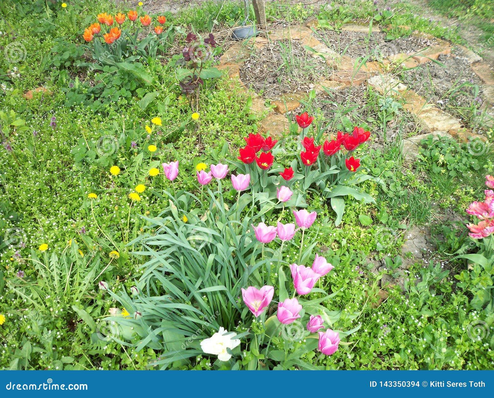 Различные тюльпаны и полевые цветки