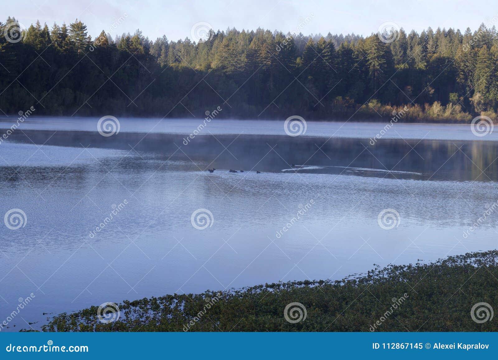 Размещенный вдоль русского реки, парк берега реки региональный как раз минуты от городских Виндзора и Healdsburg