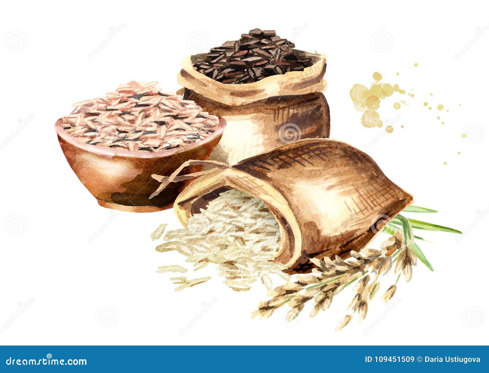 Разнообразие риса в сумках Иллюстрации акварели нарисованные рукой установили, изолированный на белой предпосылке