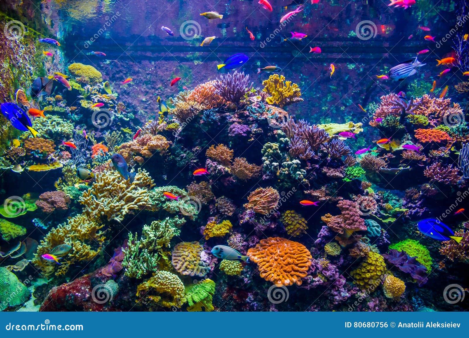 Разнообразие яркие рыбы двигают против фона полипов коралла и в подводном мире большого аквариума, Сингапура