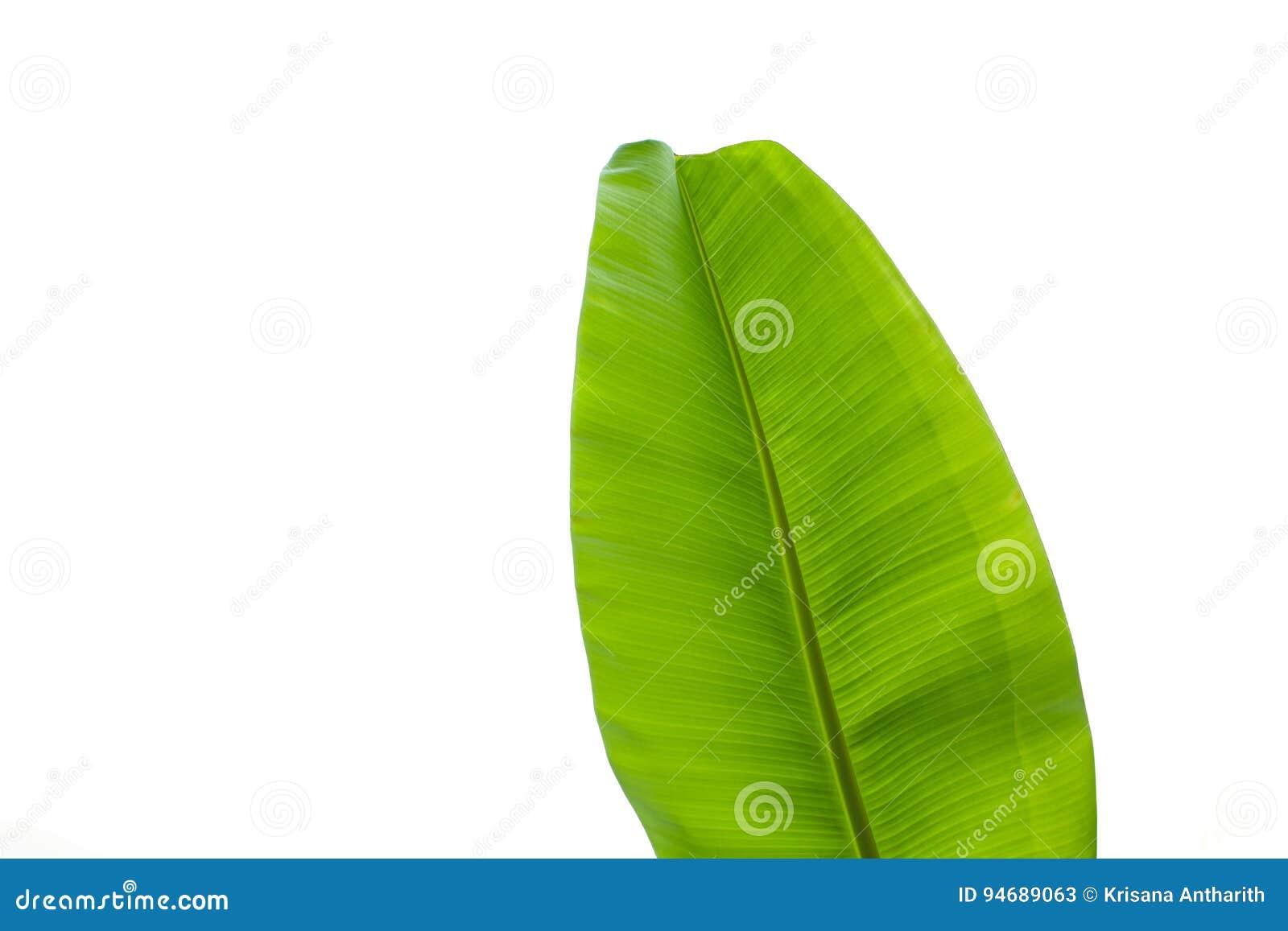 Разрешение банана изолированное над белой предпосылкой
