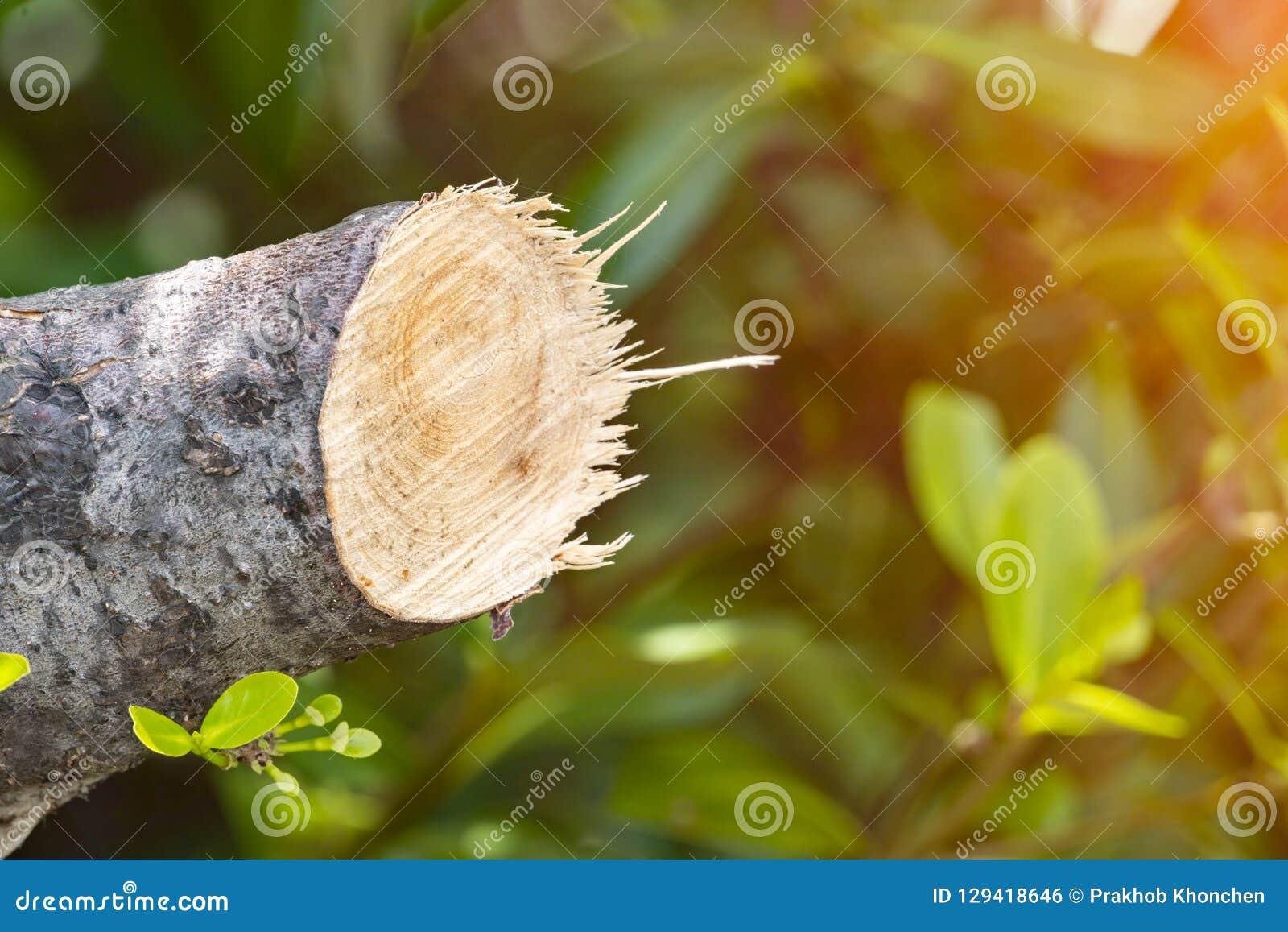 Разрушьте джунгли, журналы извлеченные от устойчивого леса под s