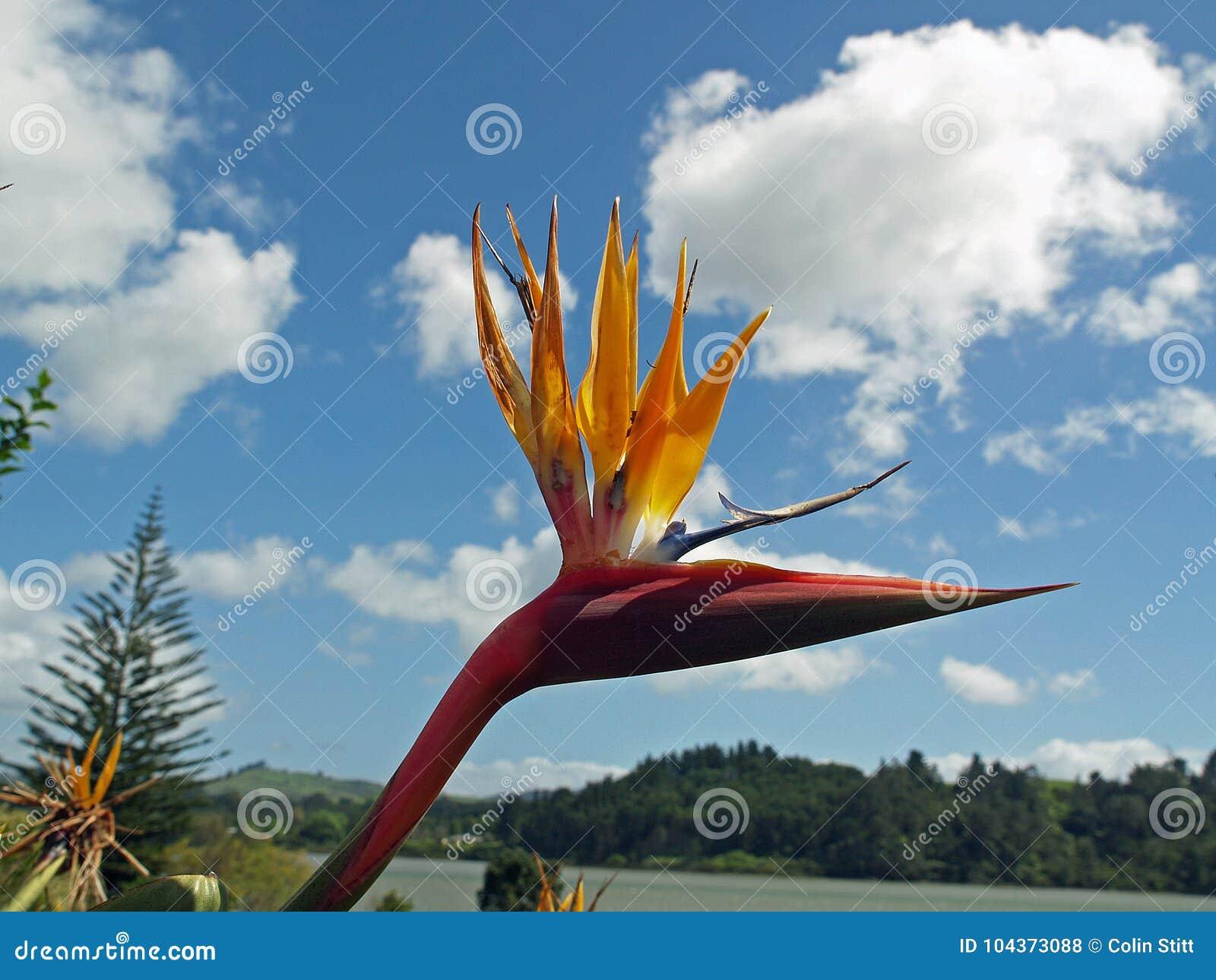 рай tenerife Канарских островов птицы