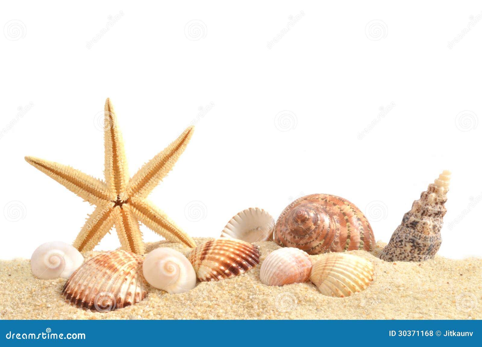 Раковина моря на песке