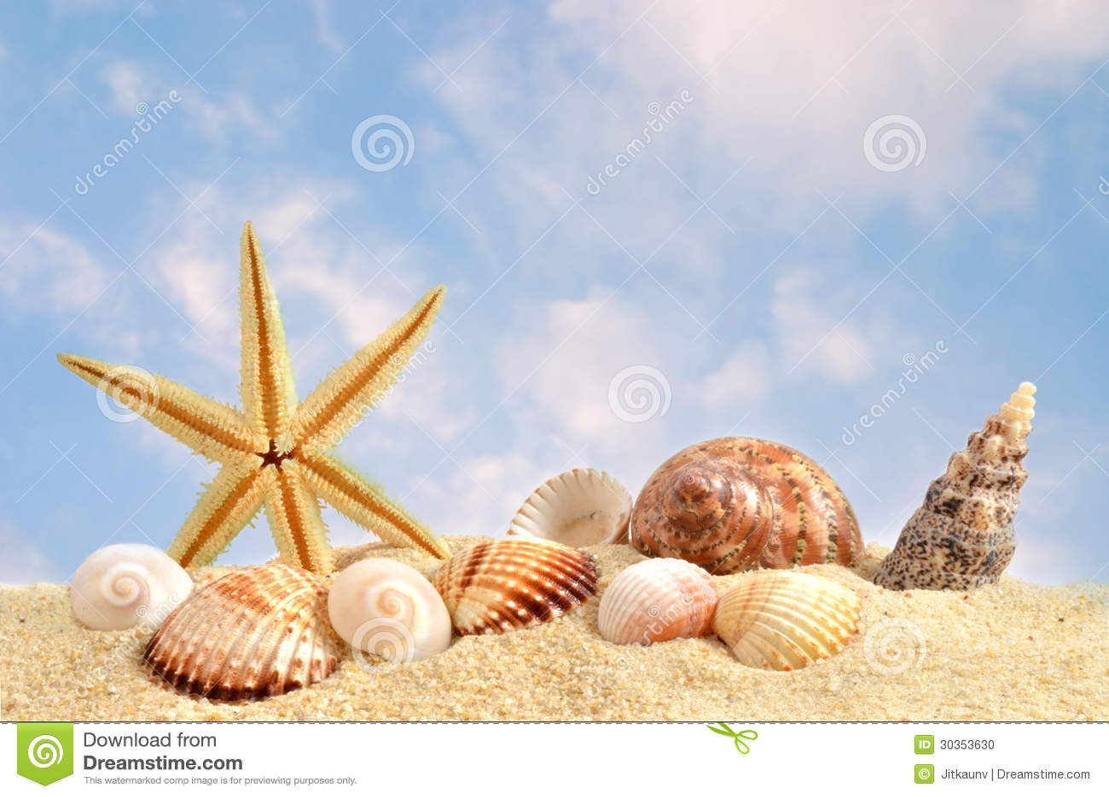 Раковина моря на пляже в песке