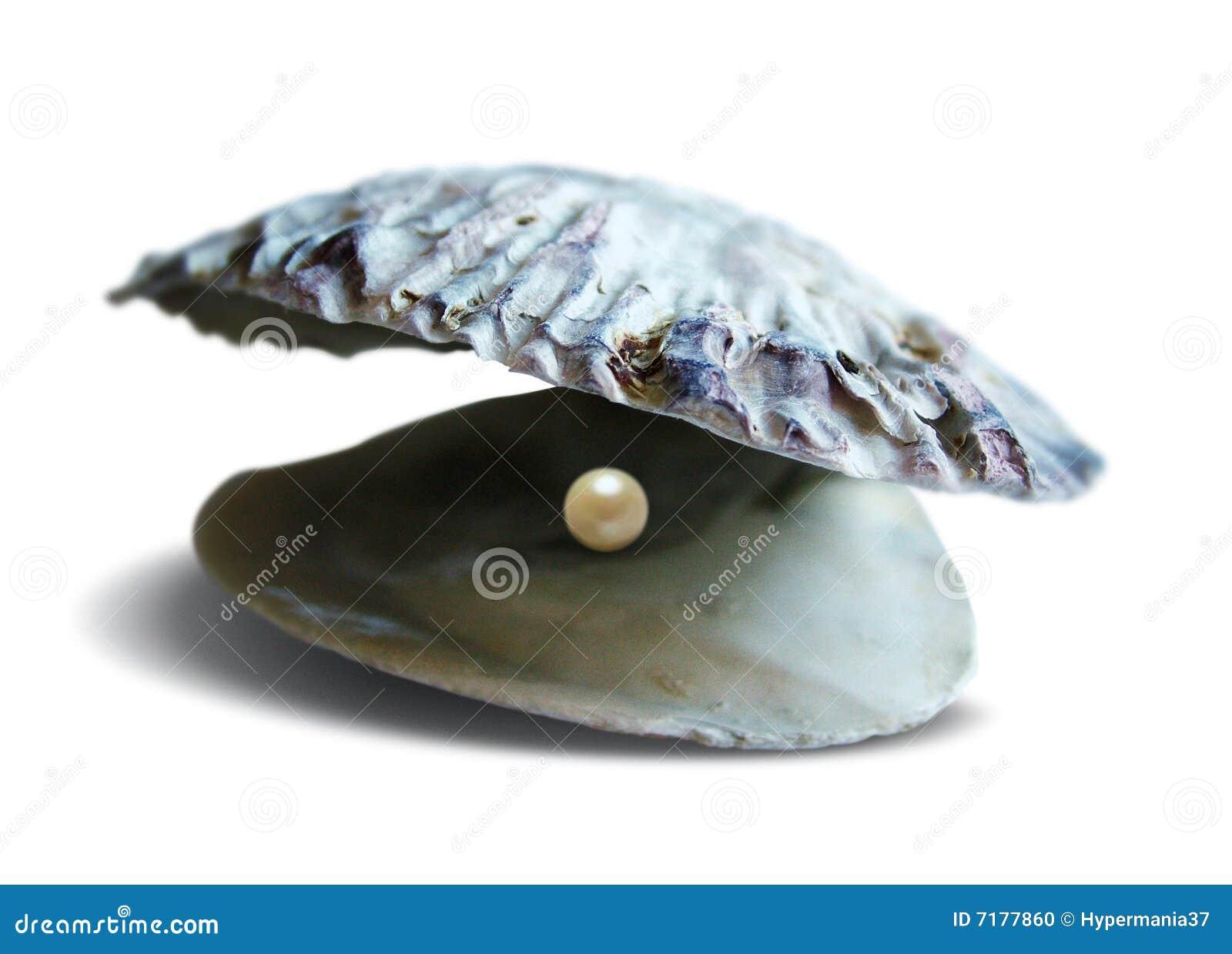 раковина моря