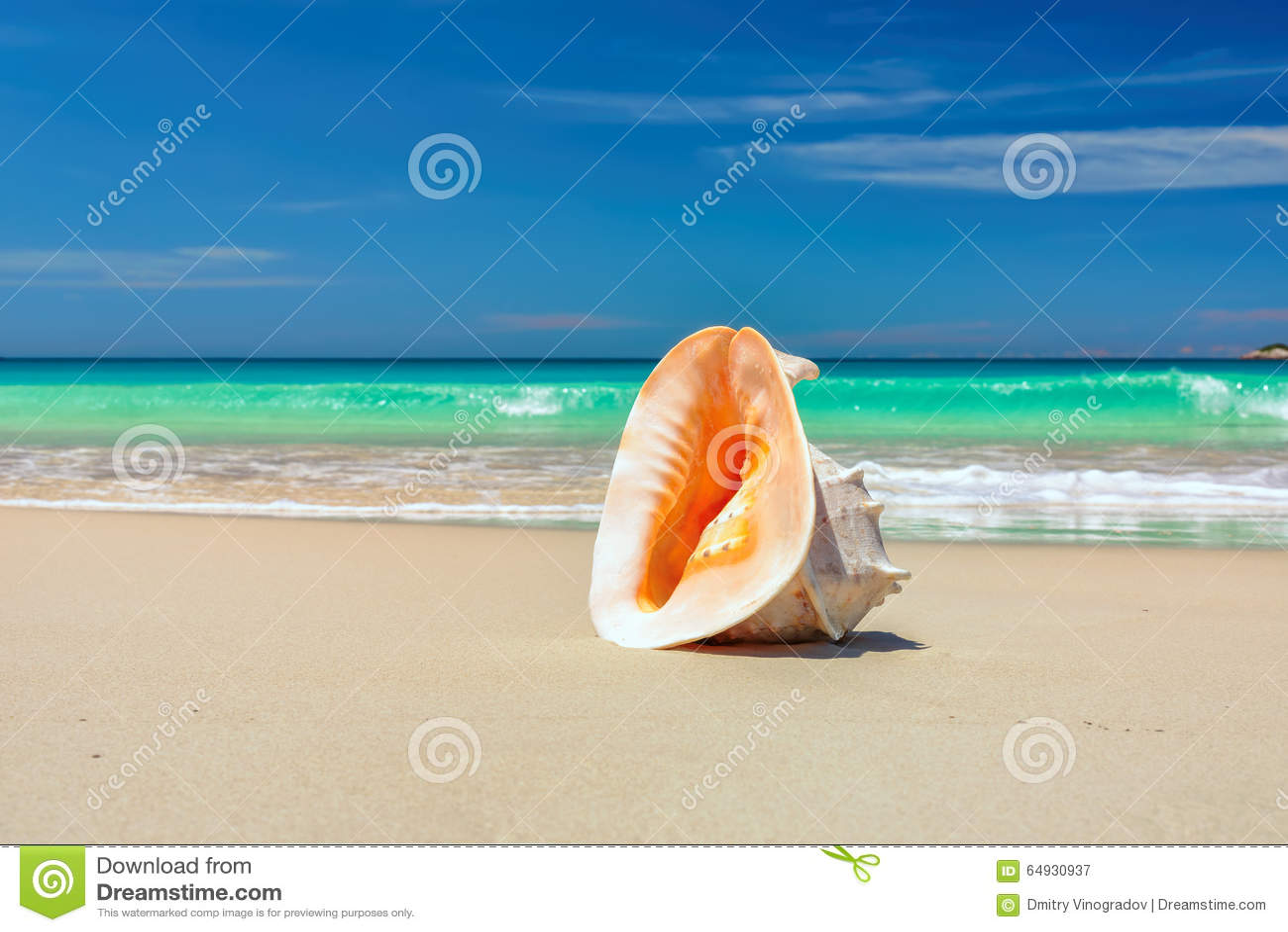 Раковина на пляже под золотым тропическим солнцем испускает лучи