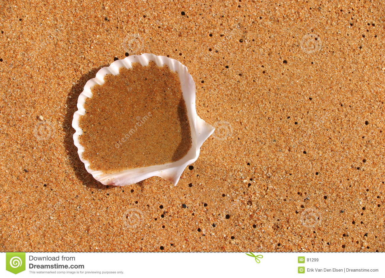 раковина померанца beachsand