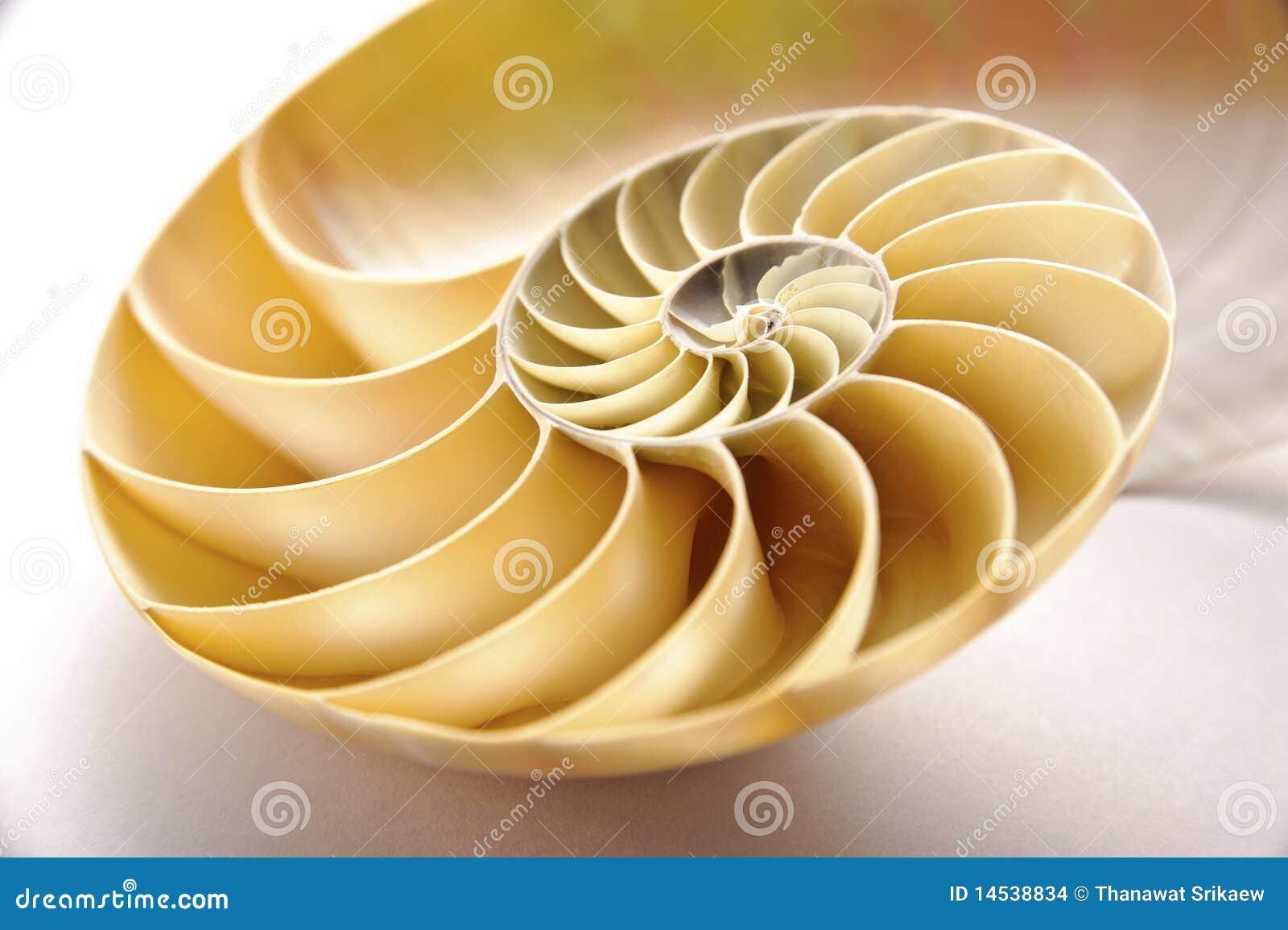 раковина nautilus