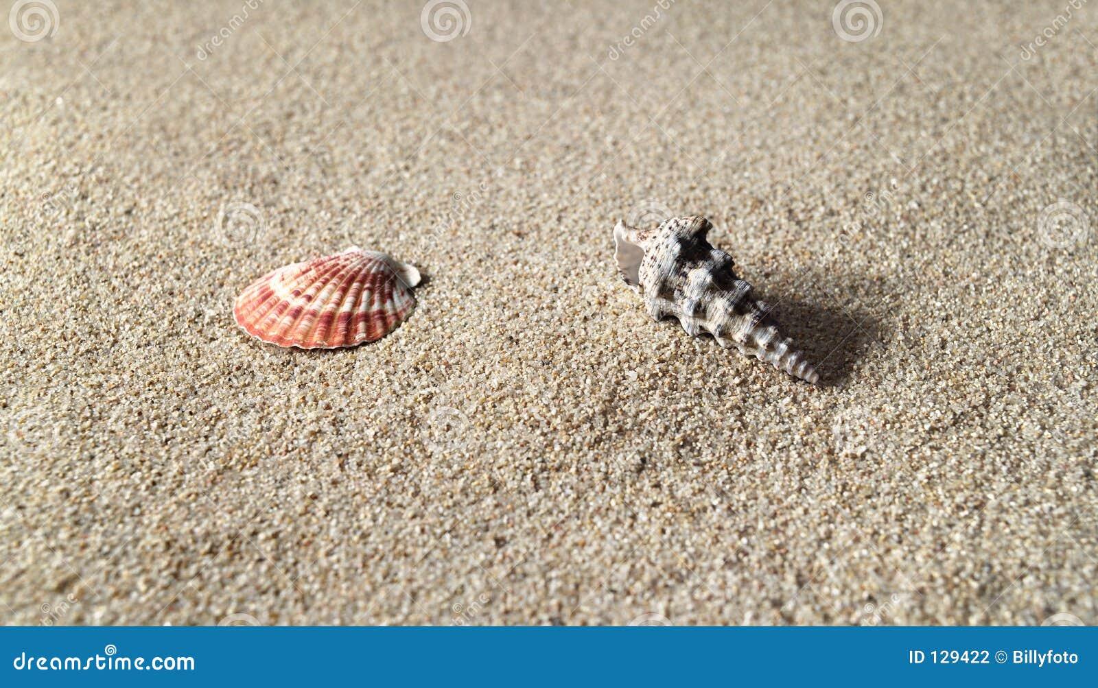 раковины моря res пляжа высокие песочные