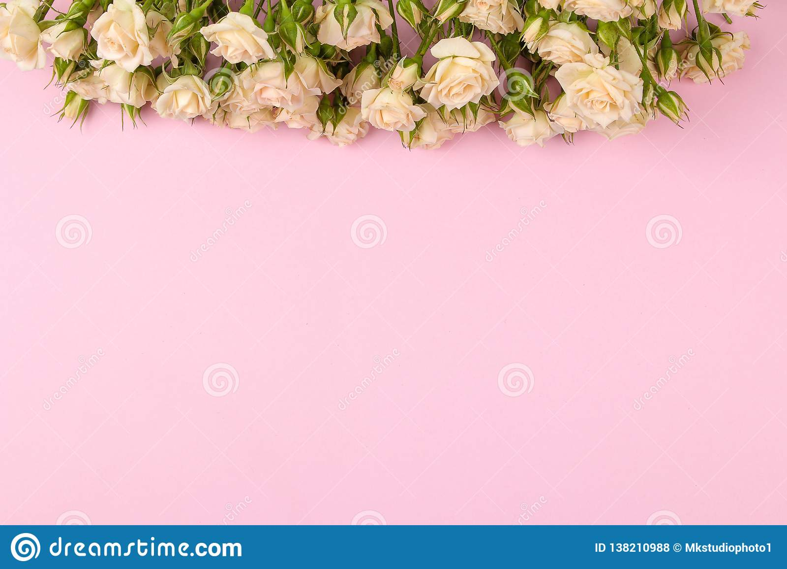 Рамка бежевых красивых мини роз на яркой розовой предпосылке праздники установьте текст Взгляд сверху