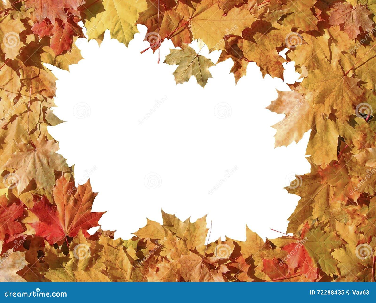 Download Рамка красочных кленовых листов осени Стоковое Изображение - изображение насчитывающей природа, макрос: 72288435