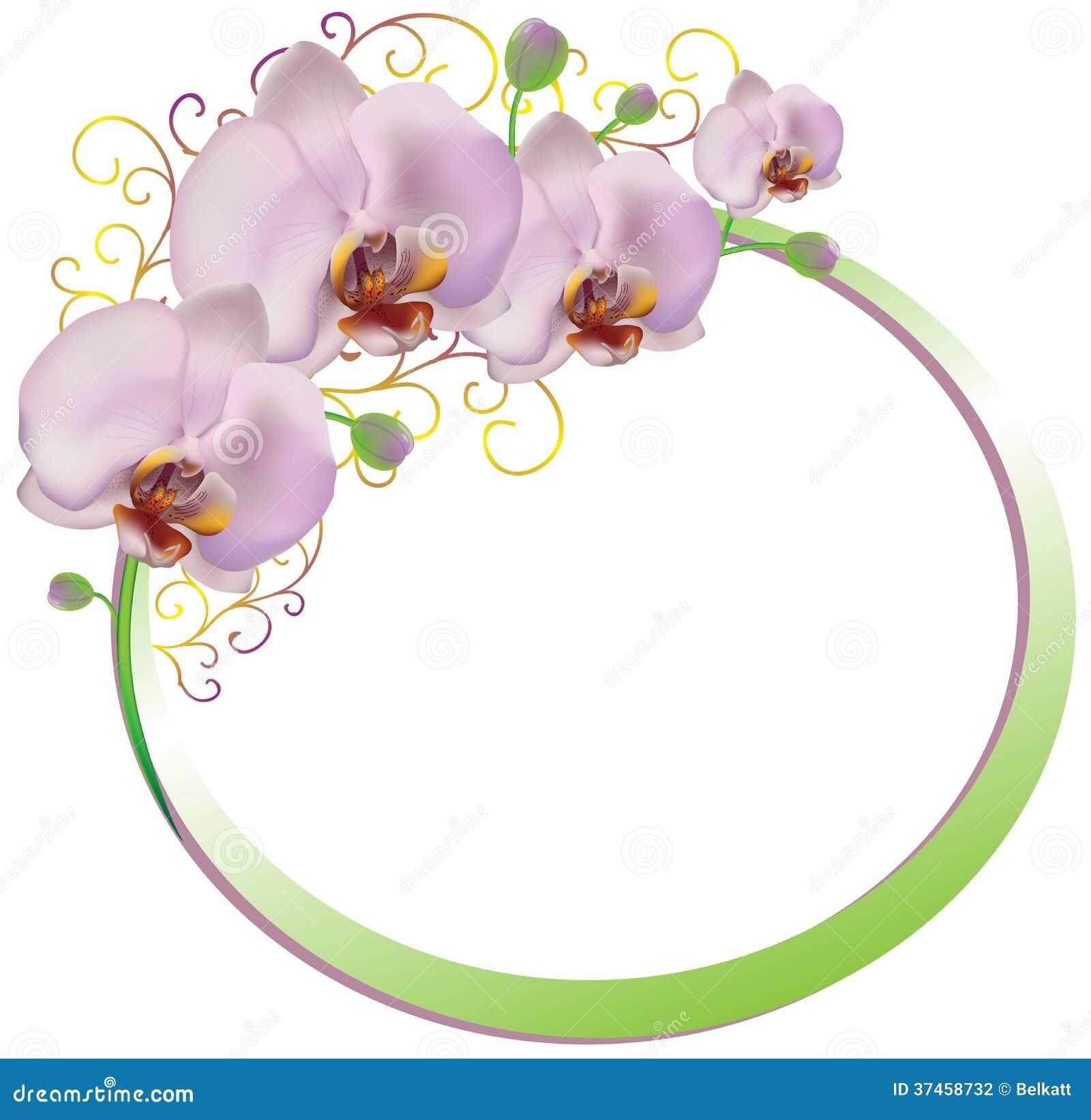 Рамка розовых орхидей