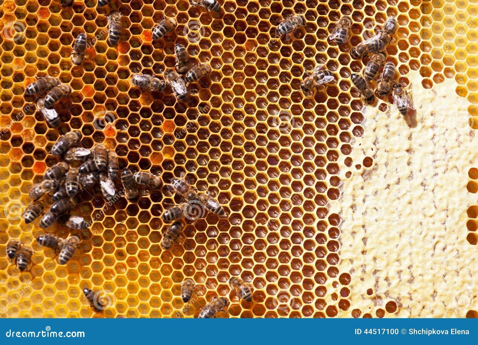 Как сделать продукты пчёл