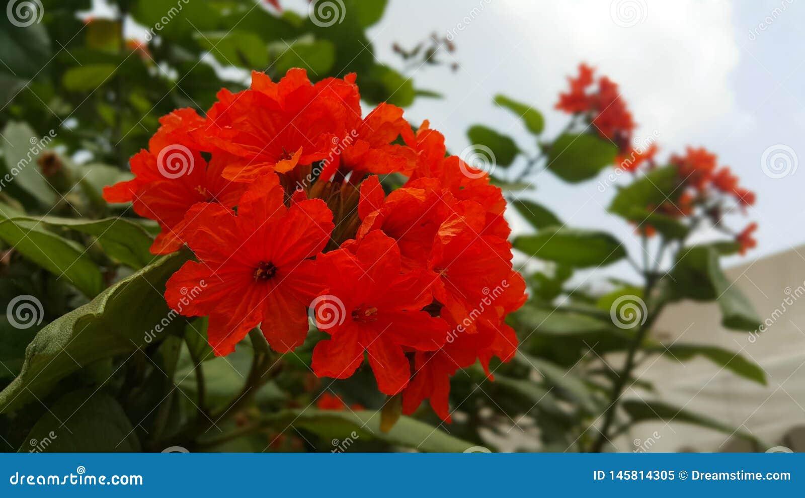 Раннее лето приносит красоту к цветкам