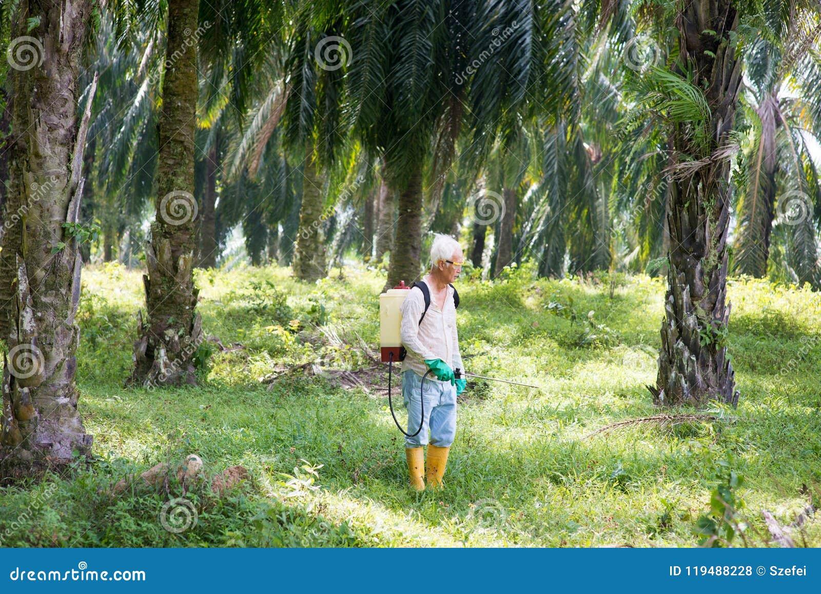 Распыляя гербициды на масличной пальме
