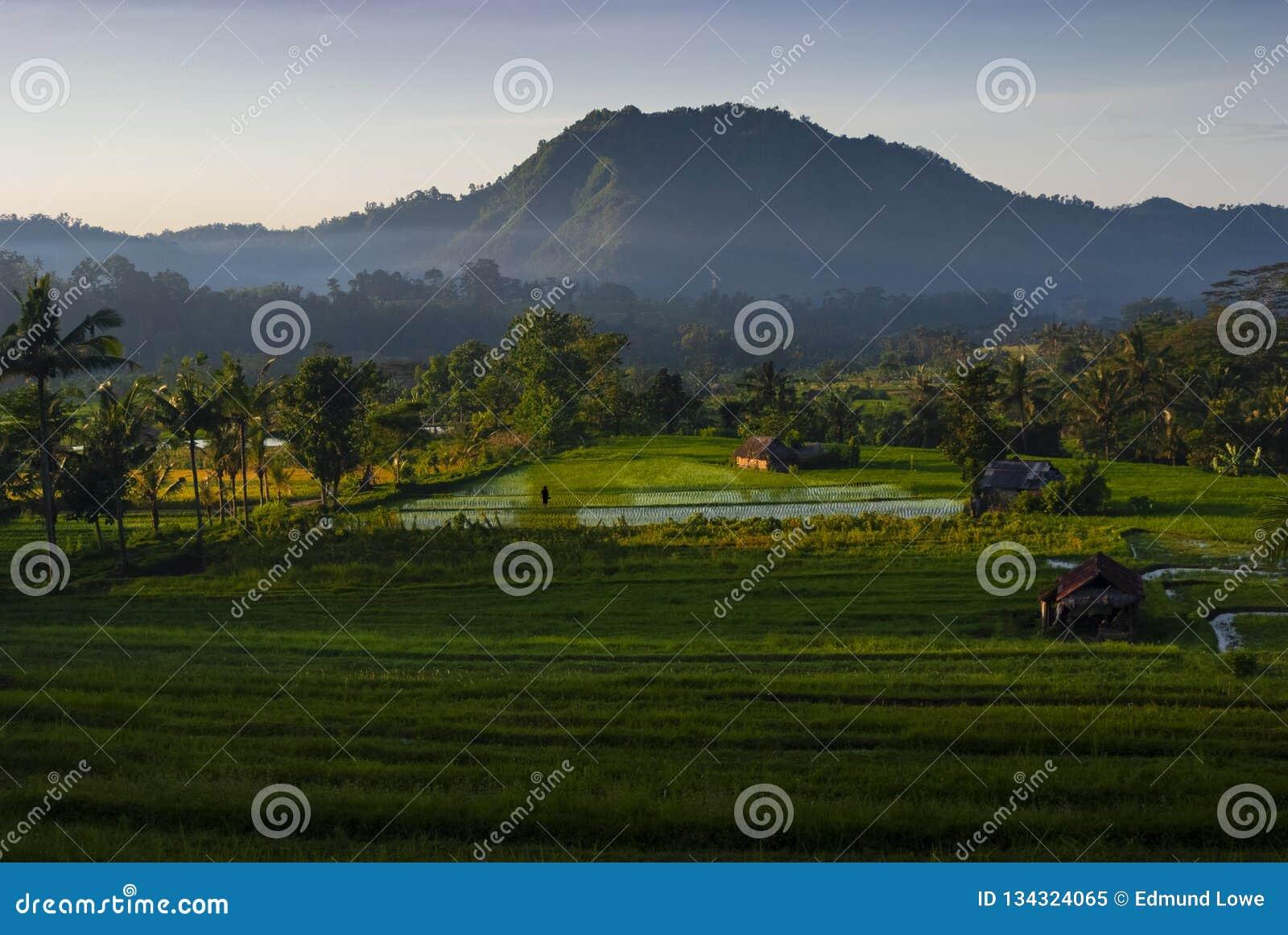 Рассвет в полях риса Бали, Индонезии
