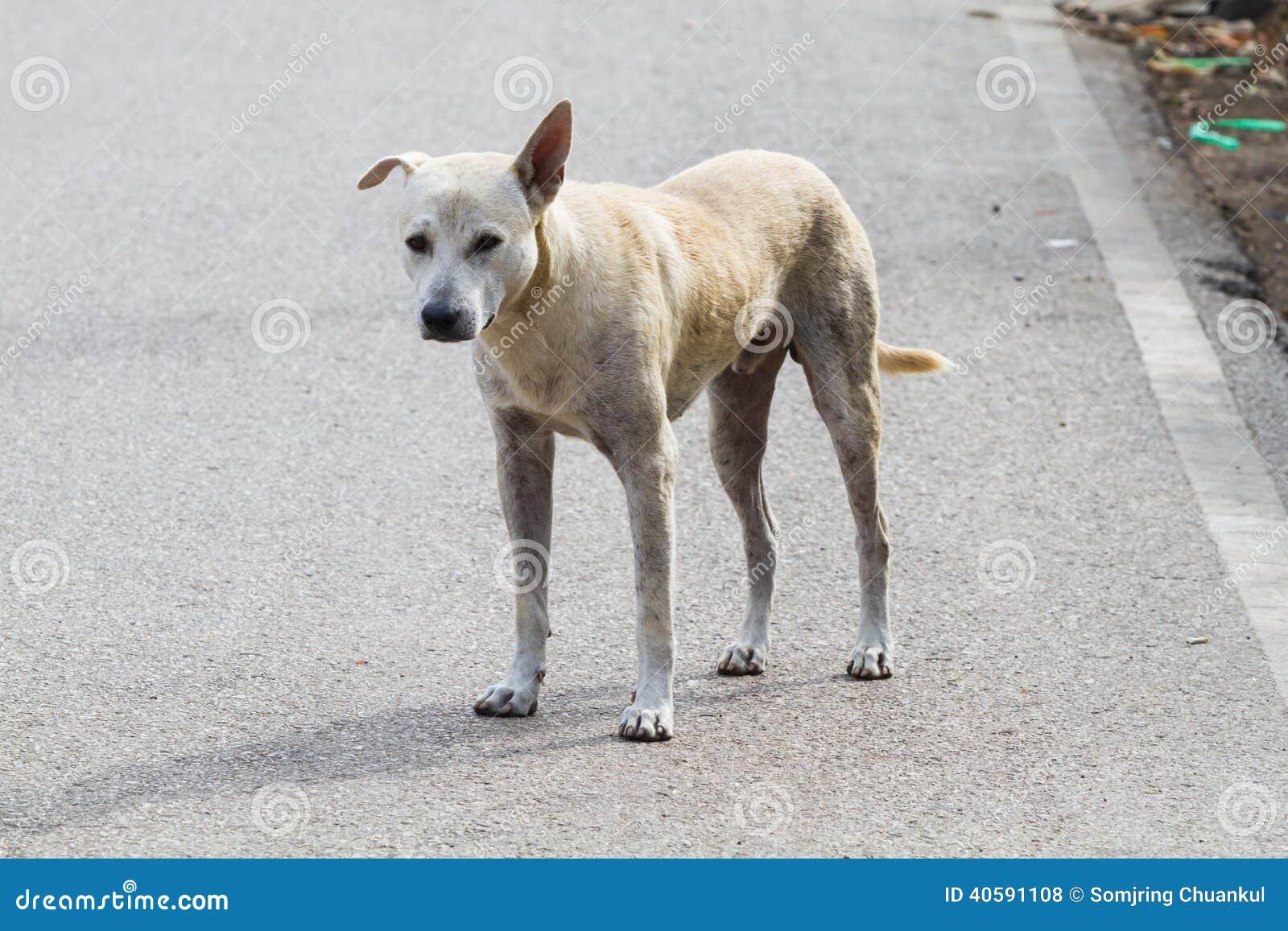 Рассеянная собака
