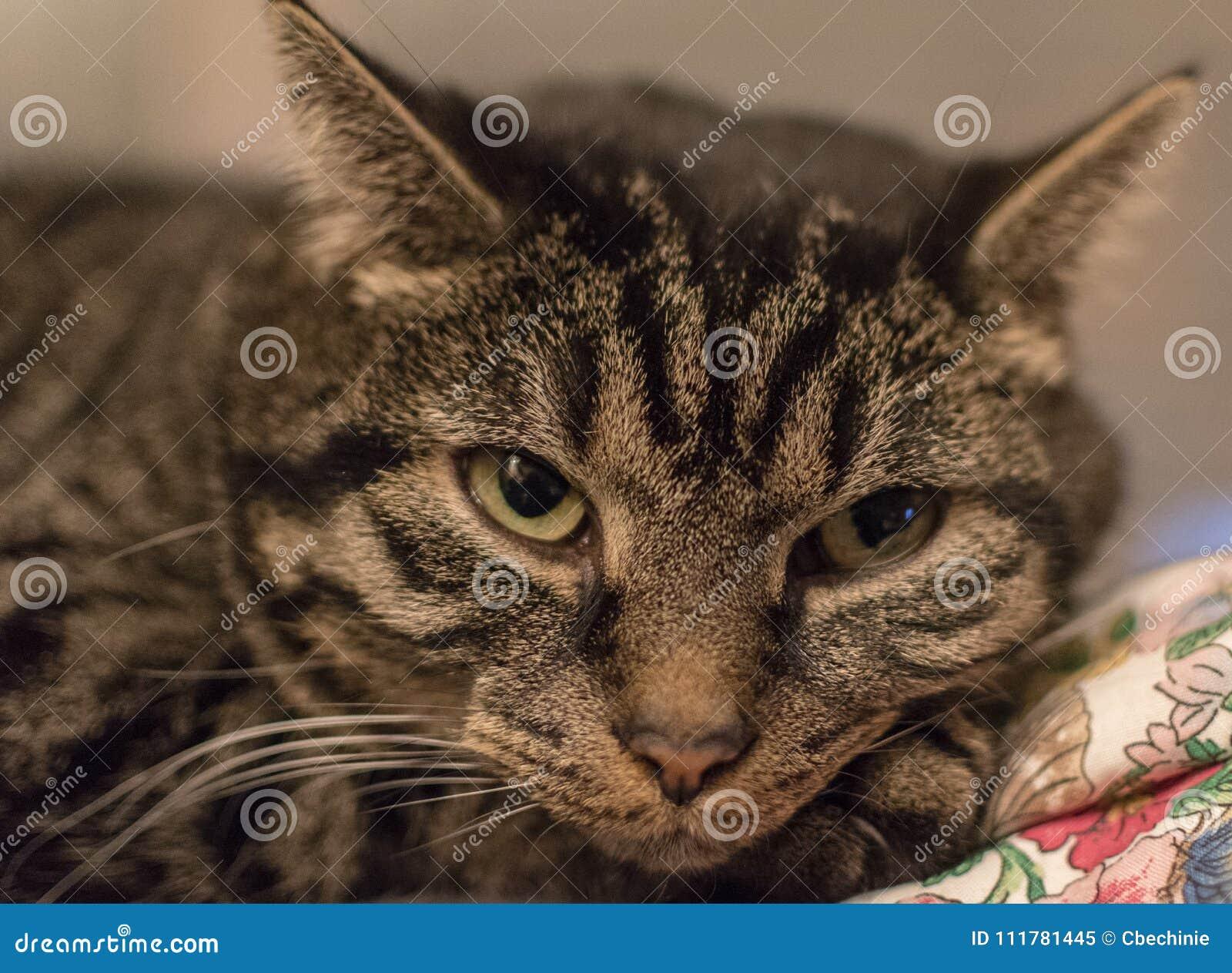 Расслабленный милый и striped кот вскоре после просыпать вверх
