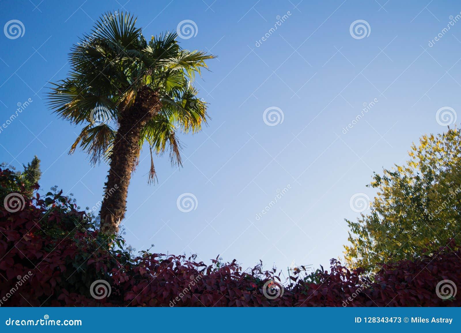 Растительность с ладонью и цвета осени в Гранаде, Испании