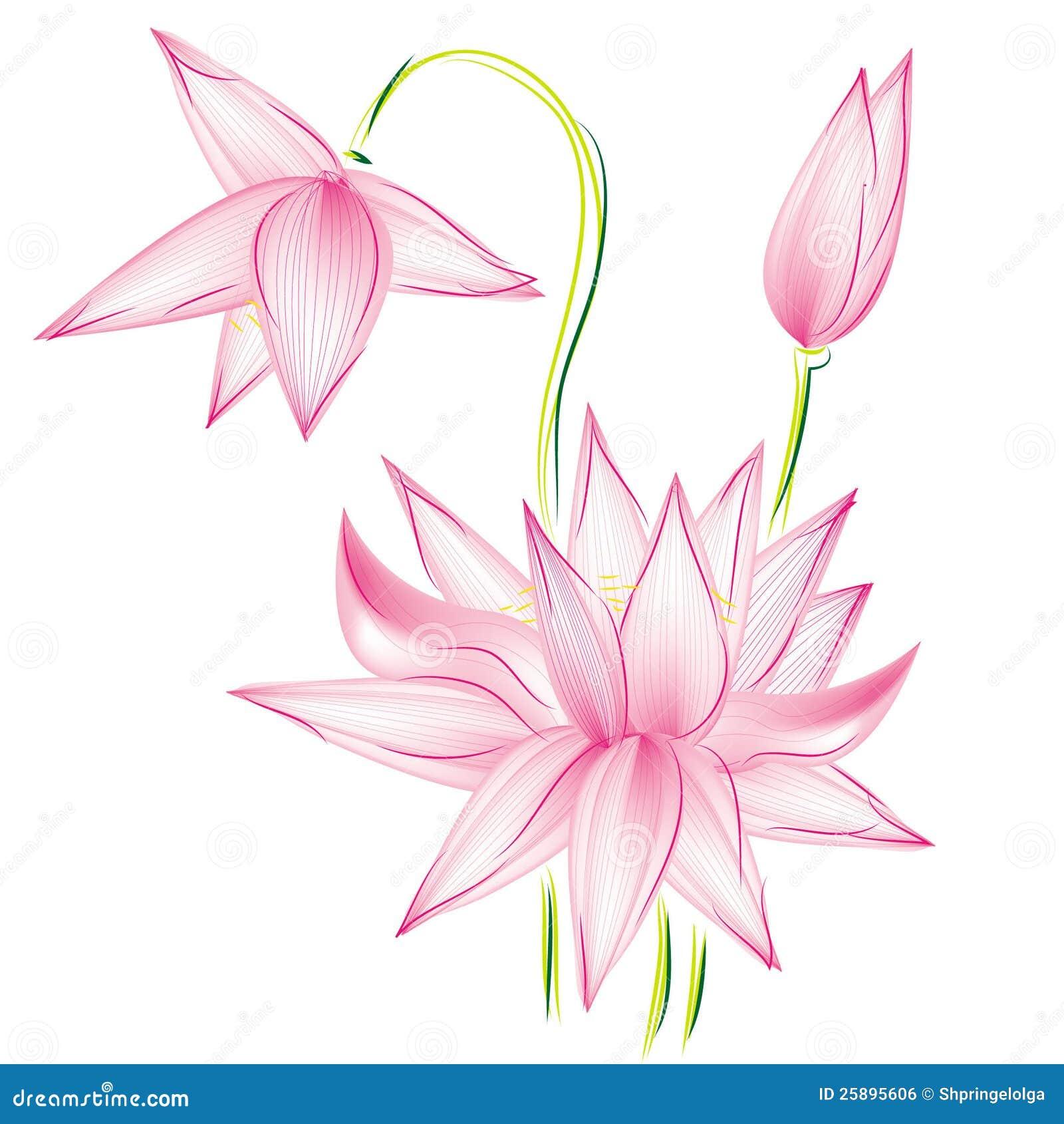 Растр лотоса цветка