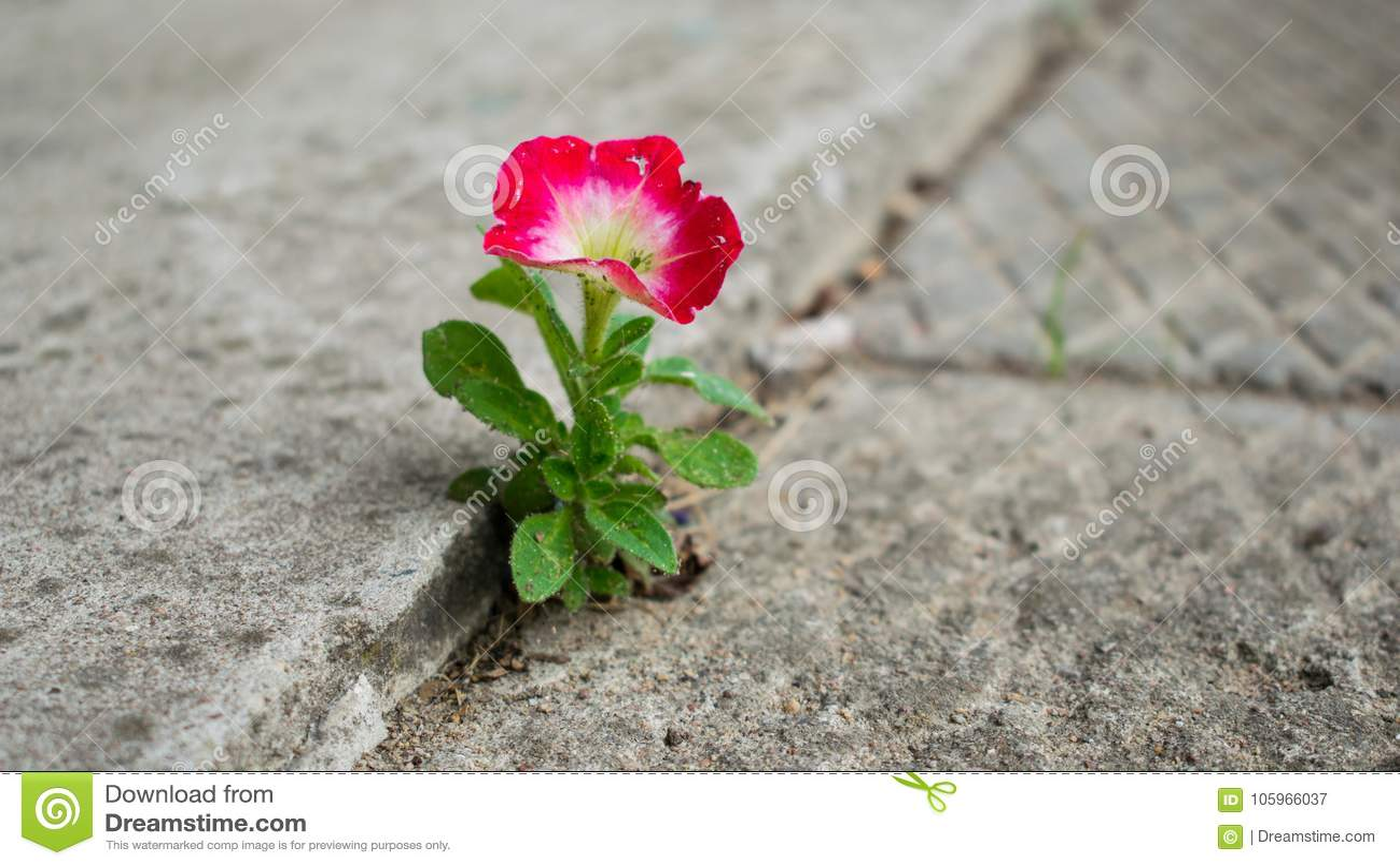 Цветок из бетона сухие смеси керамзитобетон