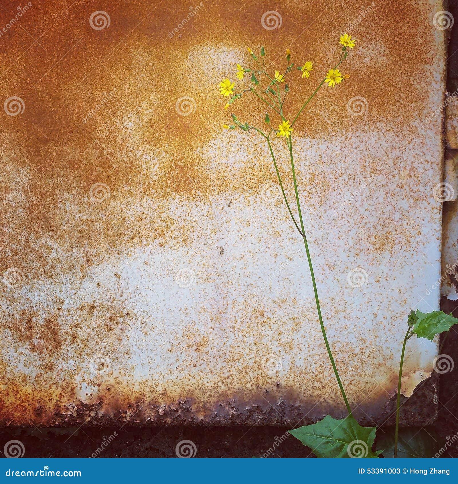 растущее цветка на угле