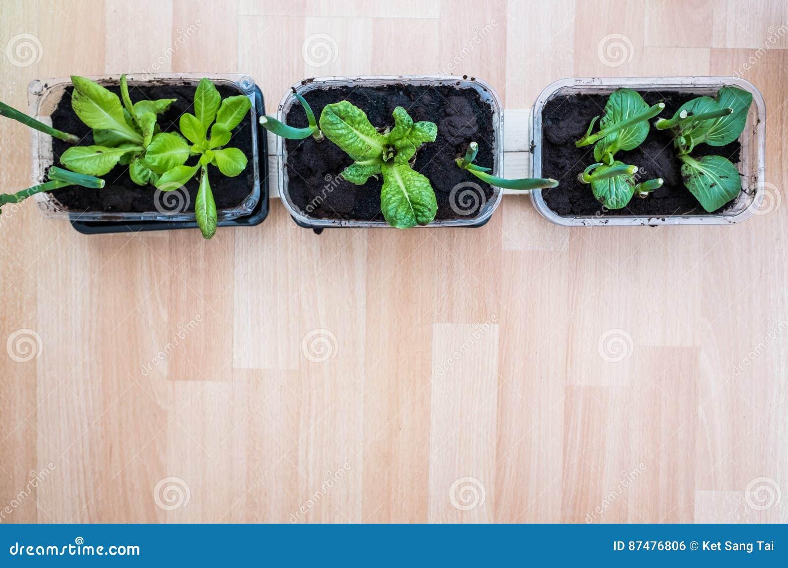 Растущие травы и овощ дома