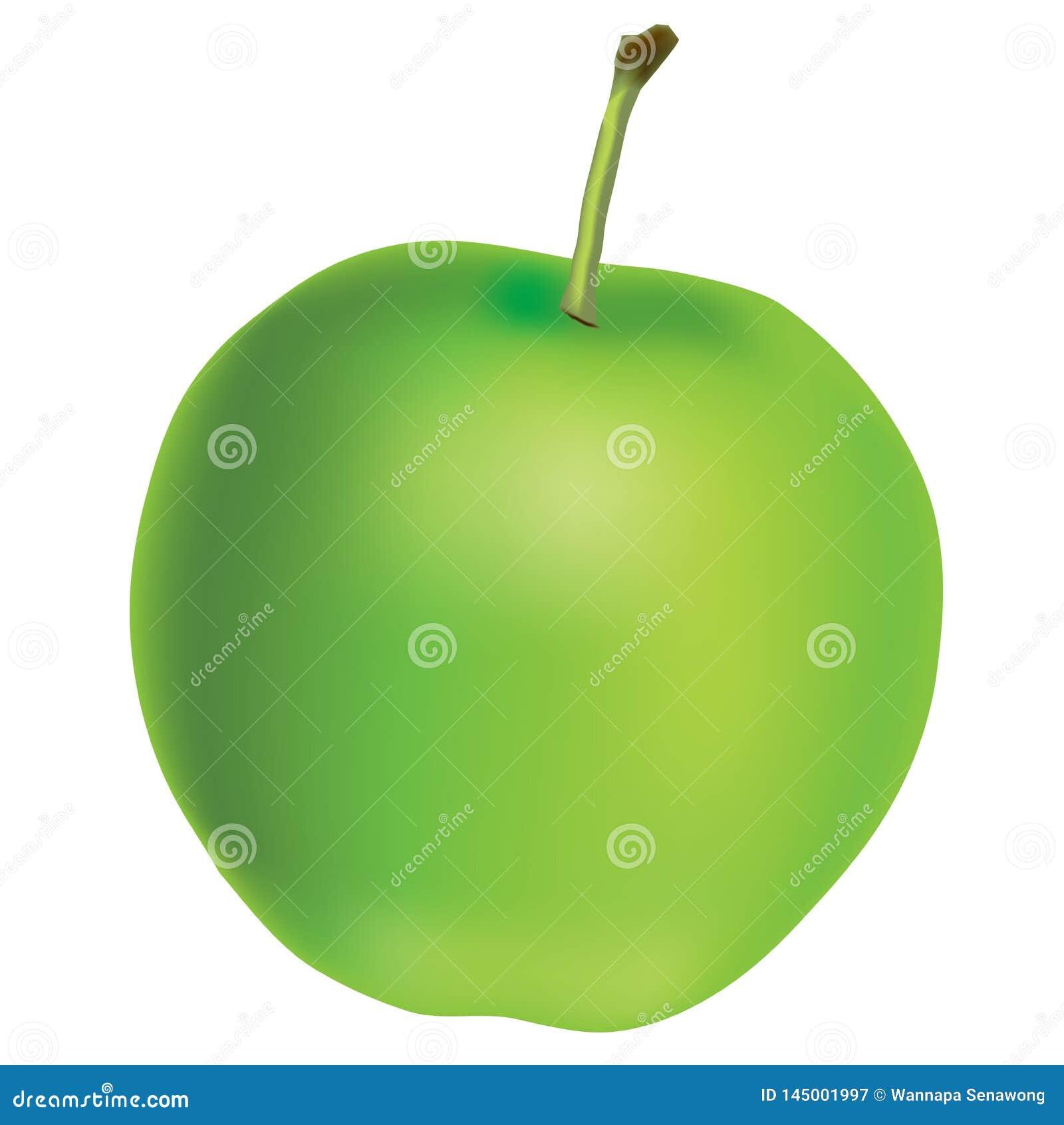 Реалистическое зеленое яблоко - графический вектор