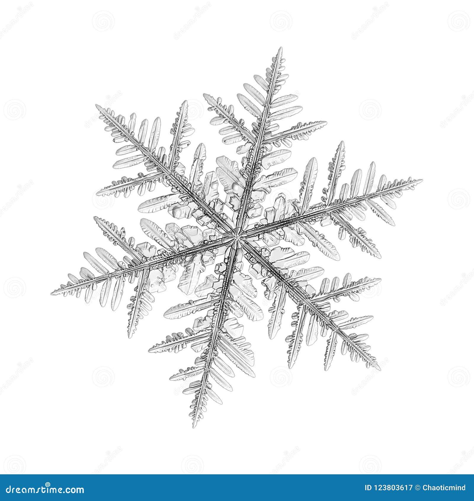 Реальная снежинка изолированная на белой предпосылке