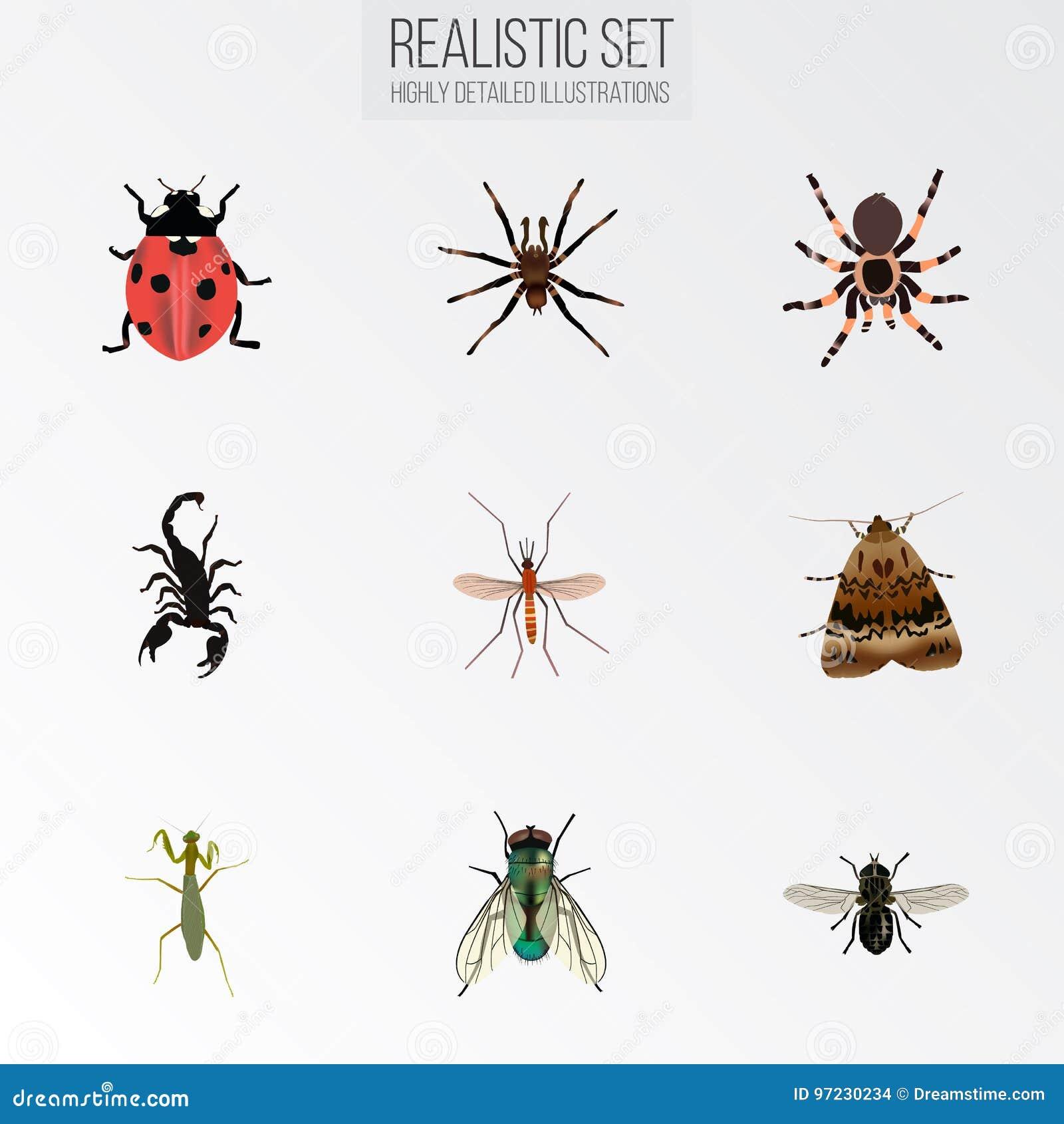 Реалистический кузнечик, мошка, паукообразные и другие элементы вектора Комплект символов насекомого реалистических также включае