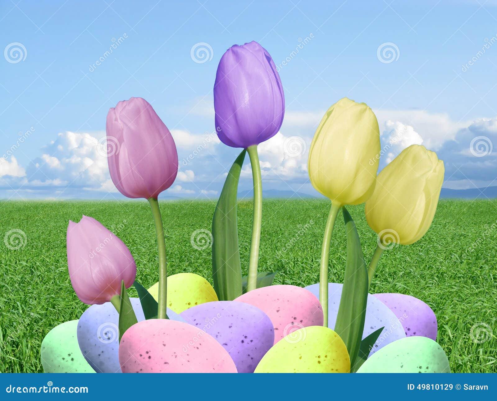 Реальные пасхальные яйца и розовые фиолетовые и желтые тюльпаны с предпосылкой зеленой травы и голубого неба