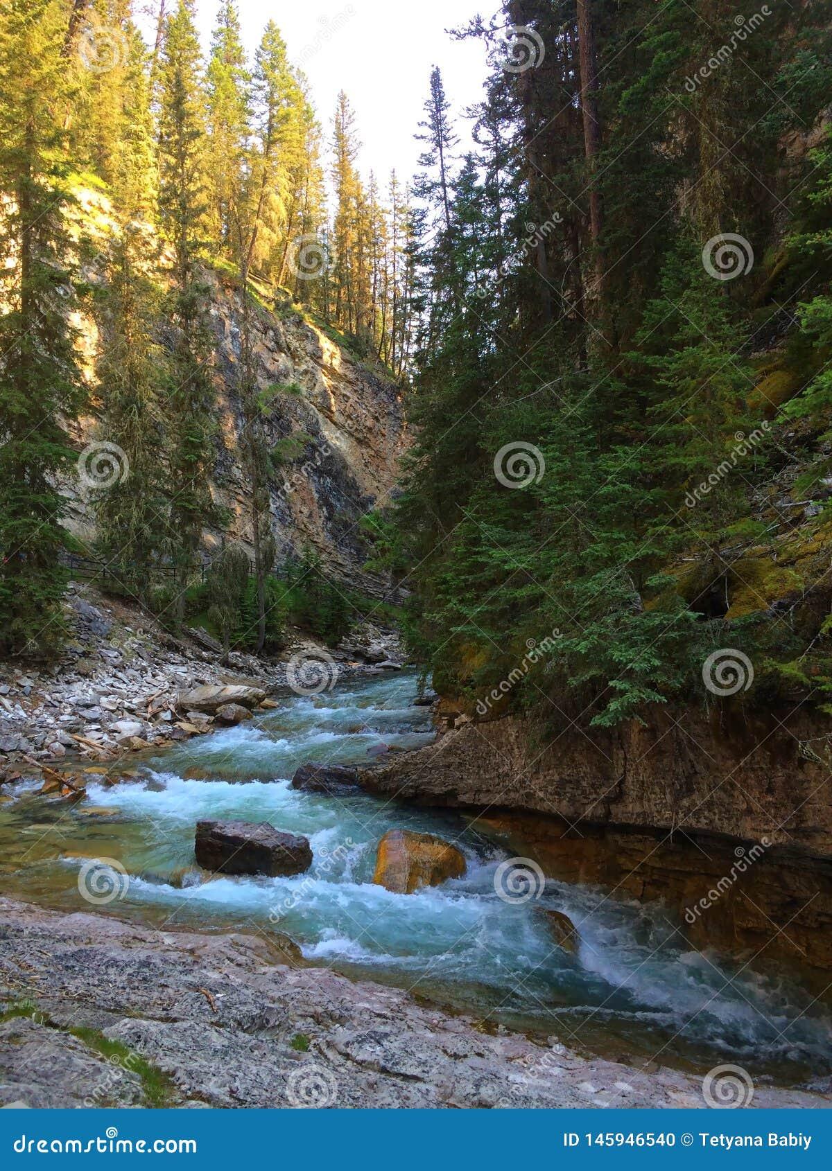 Река в сценарном каньоне Johnston, национальном парке Banff