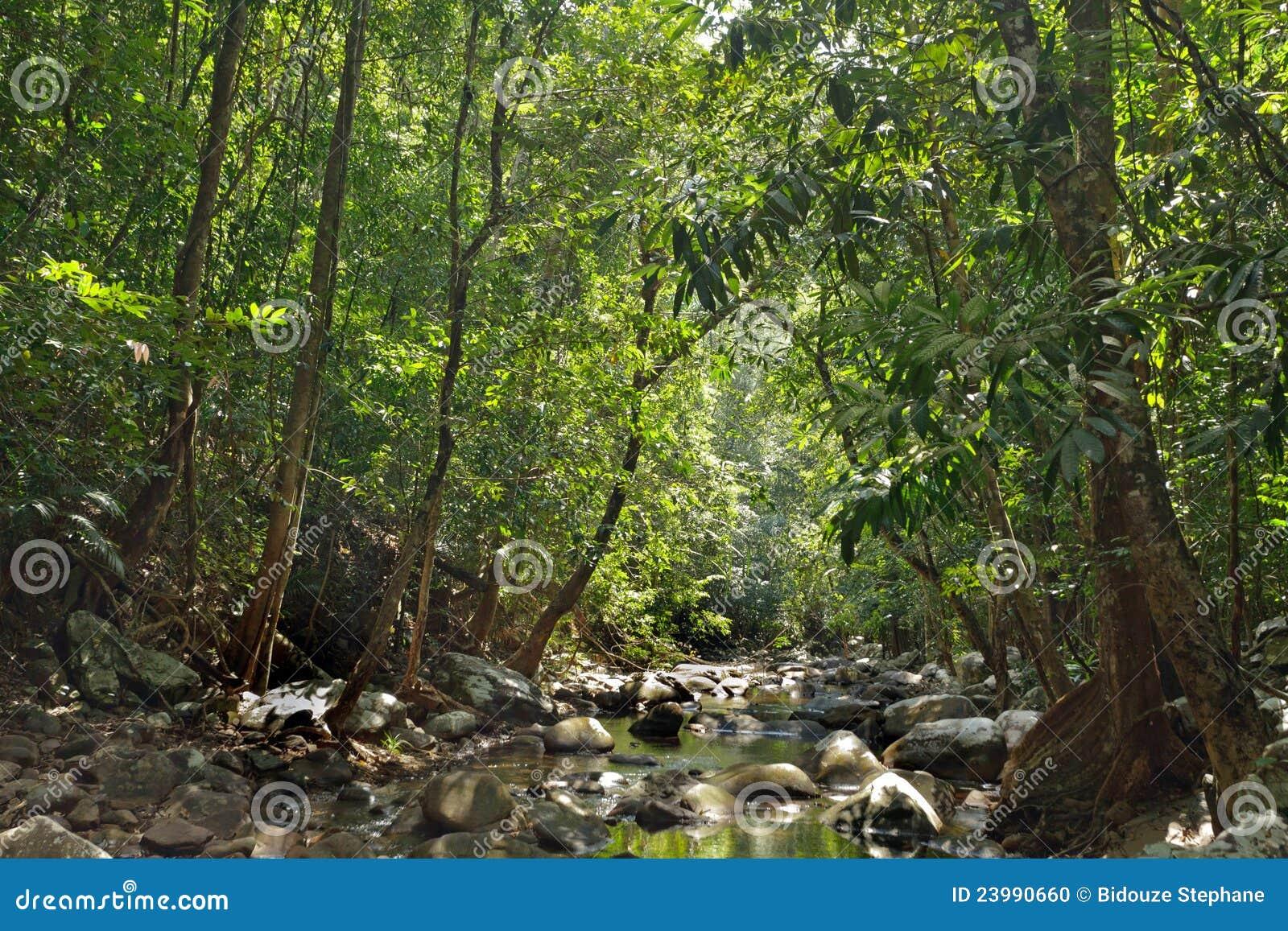 река джунглей