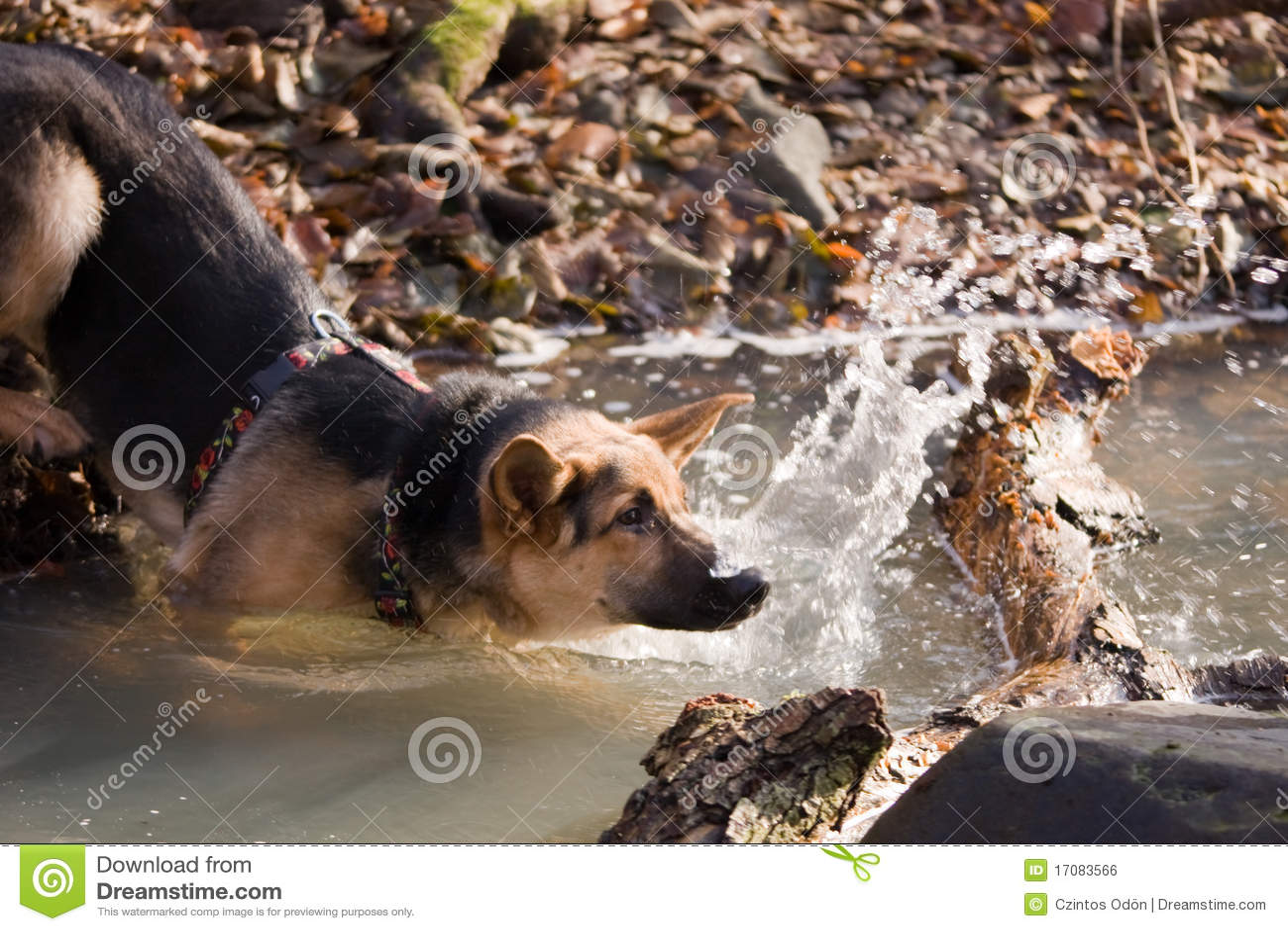 река собаки
