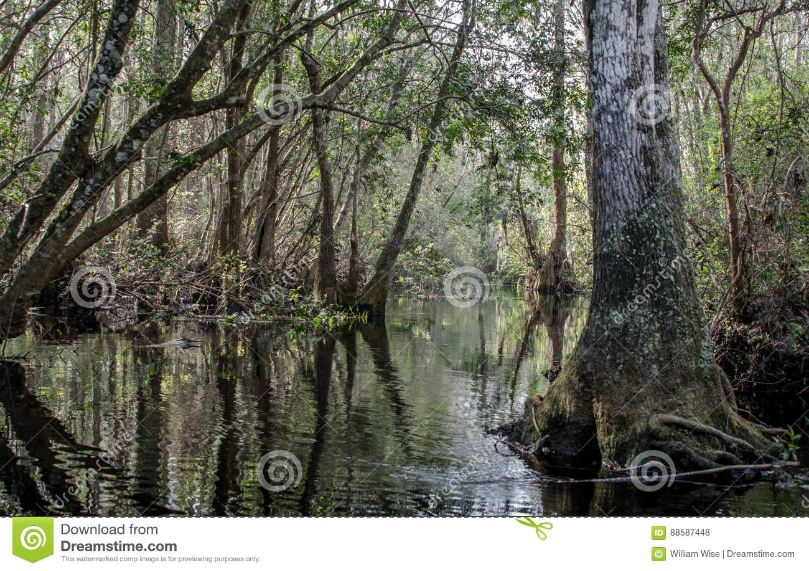 Река суживает след каное, охраняемую природную территорию соотечественника болота Okefenokee