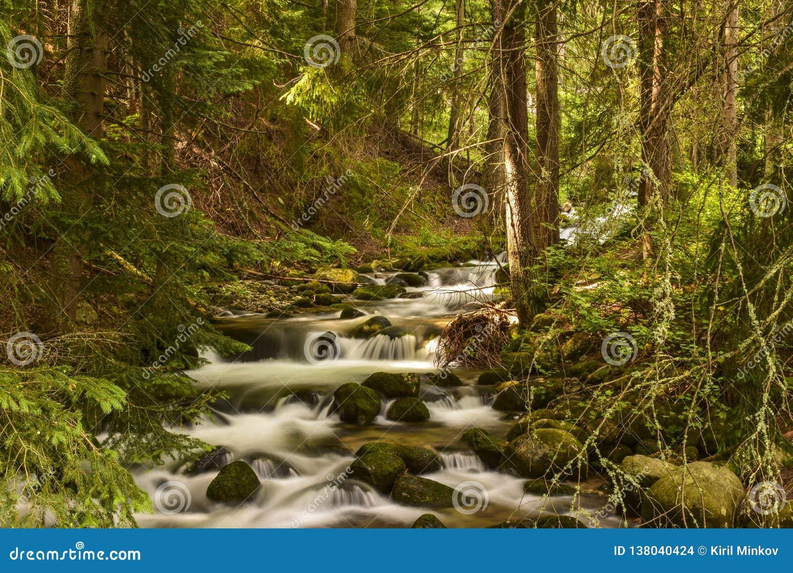 Река Bistrita летом