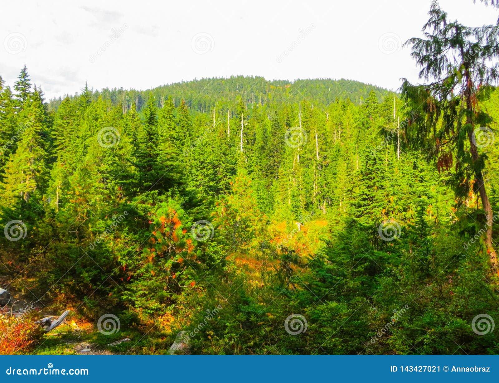 Реки горы в лесах около Ванкувера Сентябрь 2014 Британская Колумбия, Канада