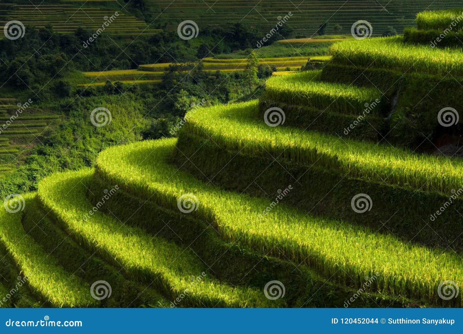 Рис fields на террасном Mu Cang Chai, YenBai, ландшафтов Вьетнама, Вьетнама