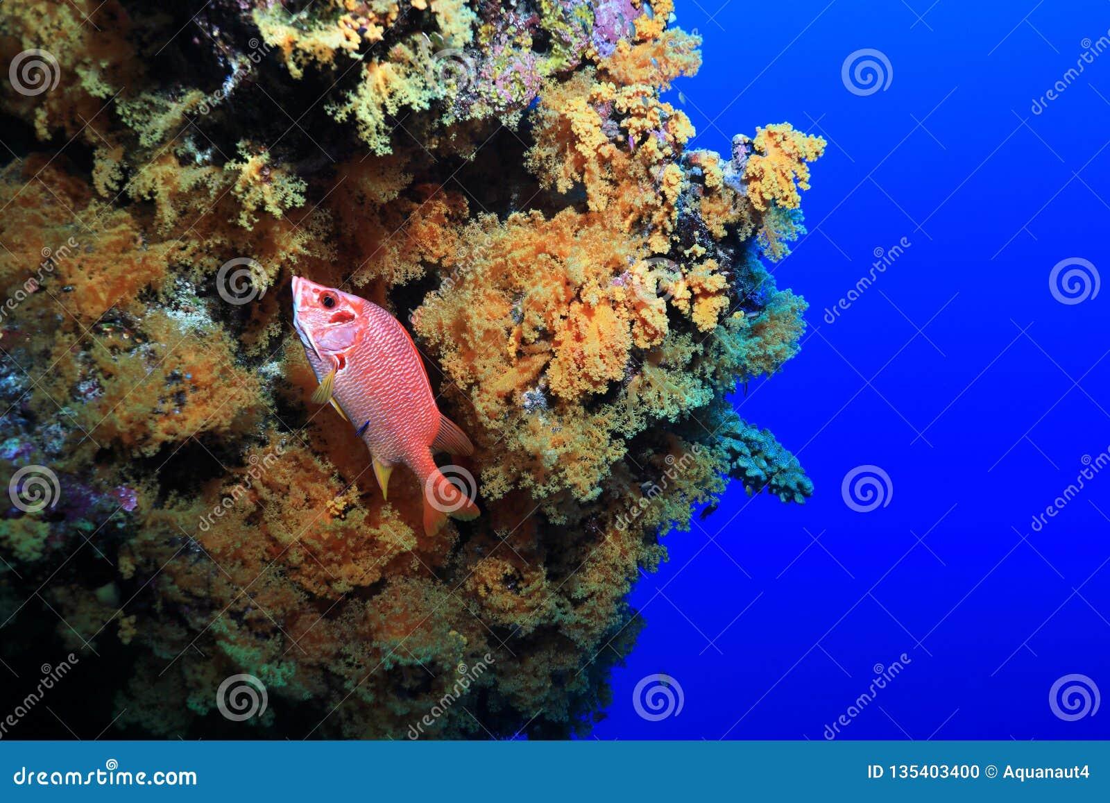 риф барьера большой
