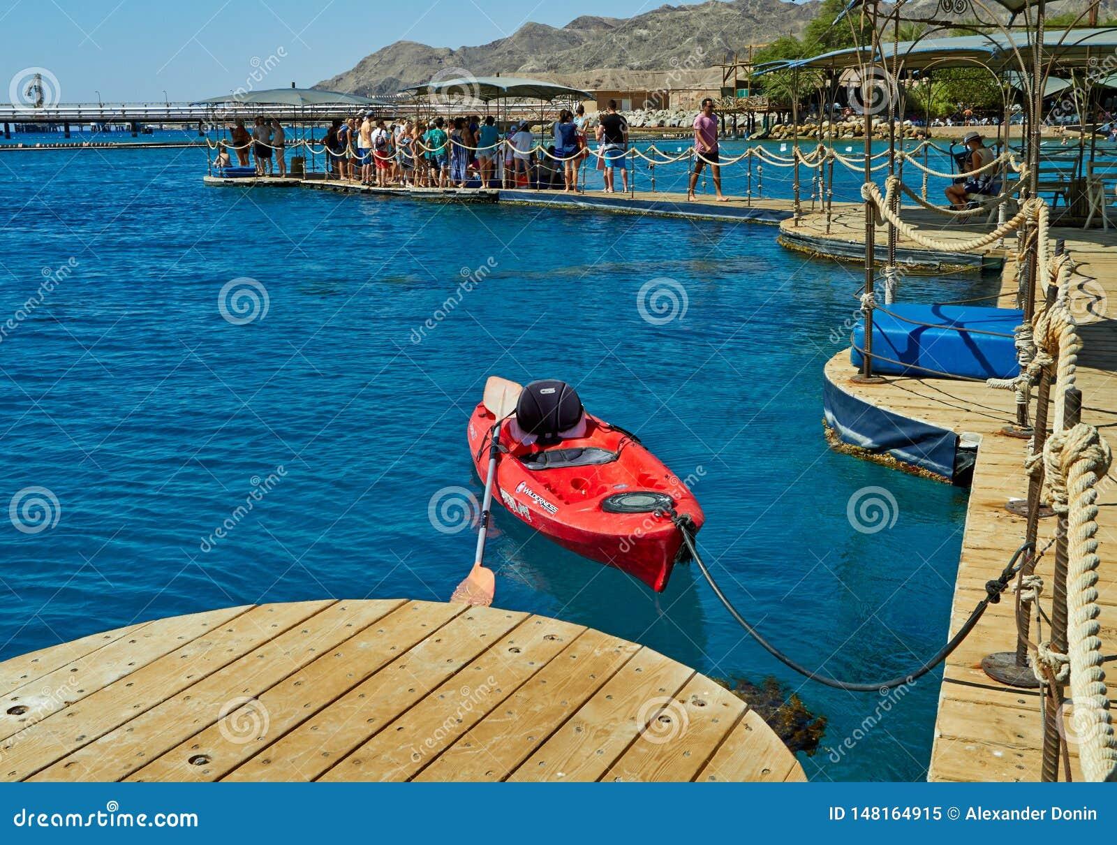 Риф дельфина на Красном Море
